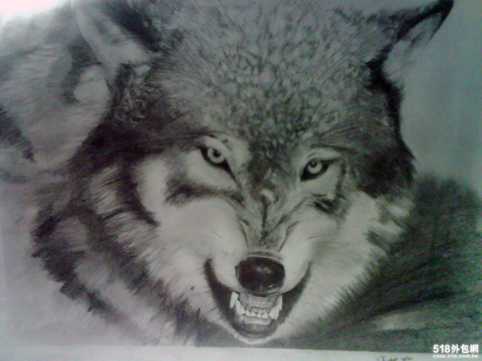 临摹素描-雪狼